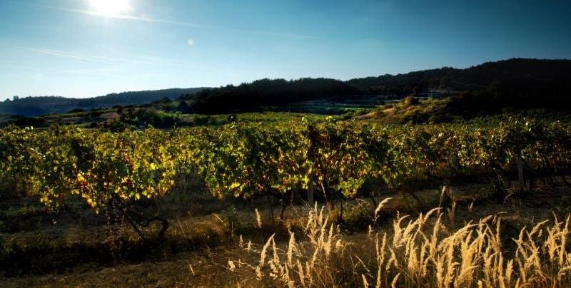 mesto modra vinice
